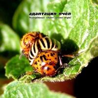 Адаптация Пчёл (Beesadaptic) - Безнадёжный cекрет (Promo Single) (Single)